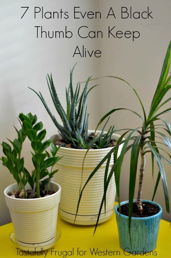 7 Plants Even A Black Thumb Can Keep Alive | Tastefully Frugal