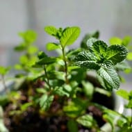 Growing Herbs: 5 Do's & Don'ts