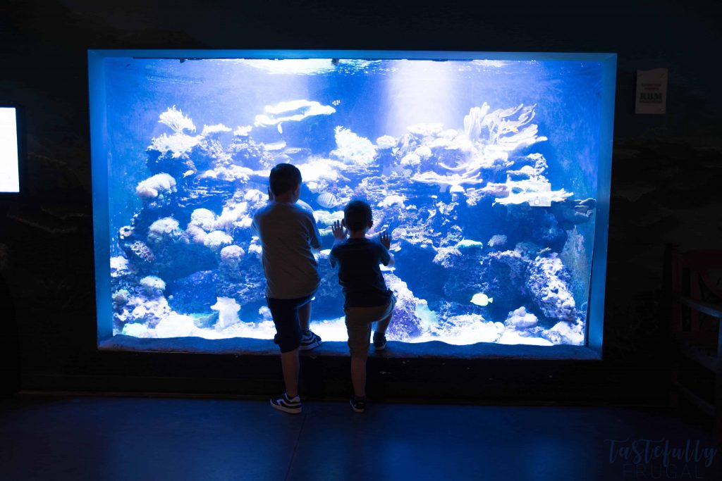 If you're looking for something fun to do with the kids this summer, check out Loveland Living Planet Aquarium. Also download your FREE Aquarium Bingo Game #ad #MoreThanAnAquarium #LLPA